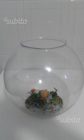 Boccia boccione per distributore acqua con posot class for Boccia pesci