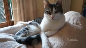 Oliver, gatto maschio di 1 anno