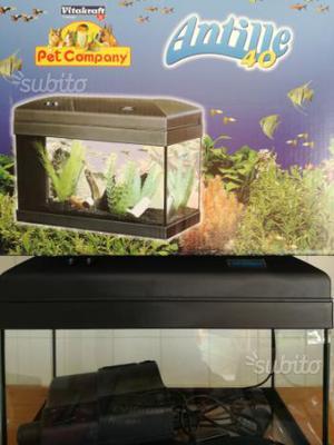 Planorbarius rosse lumaca acquario acqua posot class for Acquisto acquario usato