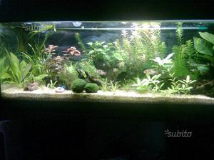 acquario euraquarium posot class