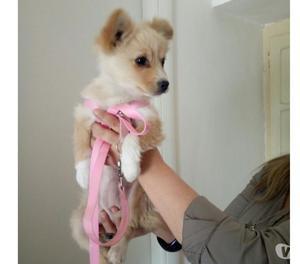 GEMMA cucciola 3 mesi taglia piccola