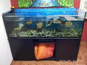 vasca acquario in acrilico 150x60x60 con mobile posot class