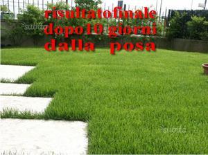 Prato pronto a rotoli savona genova imperia posot class for Prato inglese a rotoli