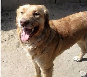 Wanda, cane 1 anno, taglia medio grande.