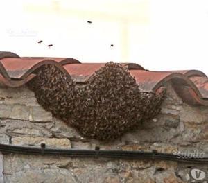 Api sciami d'api S.O.S. rimozione e recupero
