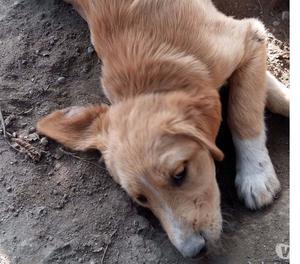 Penny, 3 mesi, bionda, dolce, bella e simpatica