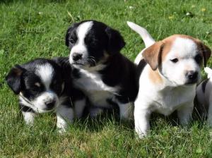 Regalasi cuccioli meticci di piccola taglia