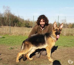 cucciolona pastore tedesco