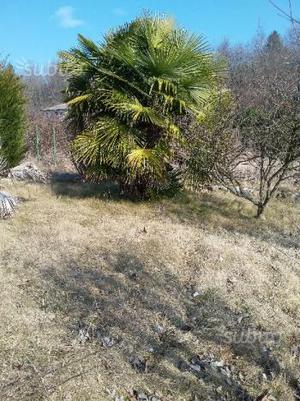 Piantana porta piante per giardino o interni posot class - Piante per giardino ...