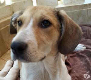 Diana, dolcissima cucciola di 4 mesi, cerca casa