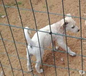 ARY...la cucciola che non ama stare in canile!!