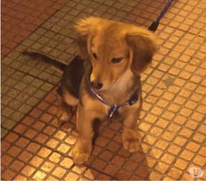 smarrito cane di razza meticcio zona san vito marina