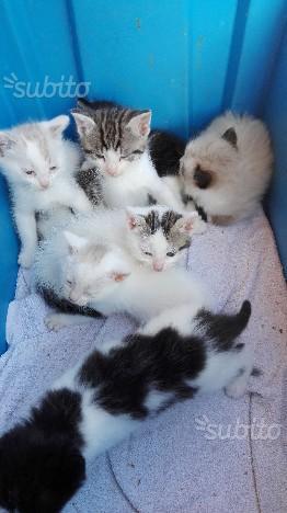 Regalo gattini stupendi
