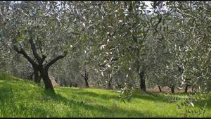 Faro per fotosintesi coltivazione piante posot class for Vendita piante ulivo
