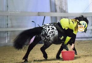 Pony per mounted games e gimkane cat a ed elite u1