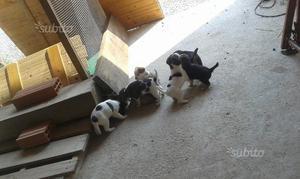 Regalo cuccioli di cane