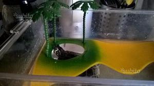 Tartaruga di terra 8-10 cm 3 anni