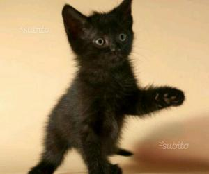 gattino a Nuoro
