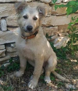 Belle 4 mesi vuole solo una famiglia che la ami