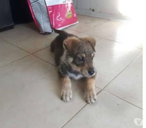 Celia cucciola 3 mesi taglia piccola cerca famiglia
