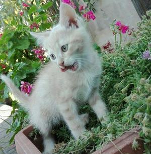 Gattini di 2 mesi e mezzo