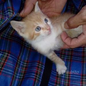 Regalo gattini di diversi colori
