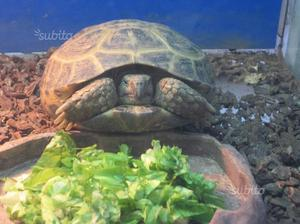 Acquari per tartarughe posot class for Termostato per tartarughe