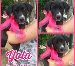 Cuccioli in regalo posot class for Regalo tutto gratis