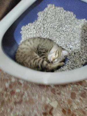 GATTI 2 il primo e un gattino