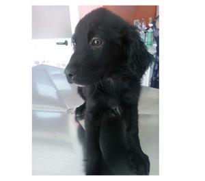 Giosy cucciola mix setter 3 mesi in adozione