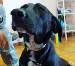 Diana, cane 10 mesi, taglia media.