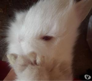 criceti e conigli