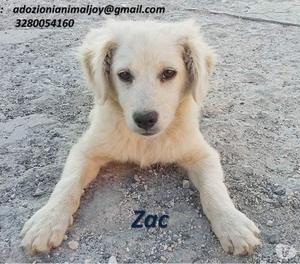 Cucciolo taglia piccola Zac