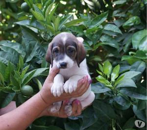 Lara cucciola in adozione