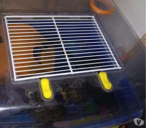 Regalo 2 tartarughe d acqua dolce milano posot class for Termostato per tartarughe
