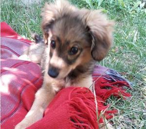 Briciola: adozione del cuore per cucciola