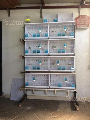 Batteria di 8 gabbie sistema carta