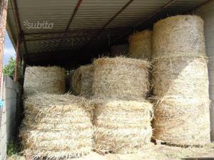 Paglia di grano duro