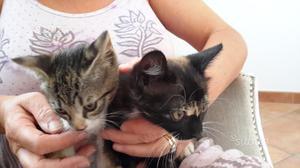 Regalo 2 gattini piccoli
