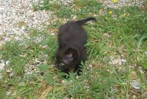 Regalo gattini maschio e femmina di due mesi