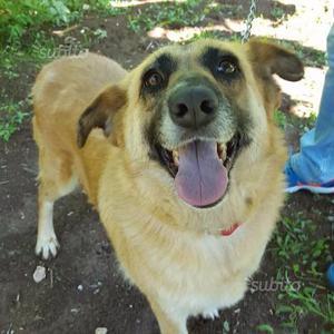 Palmerina, gioiosa cagnolina di 3 anni a Verona