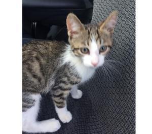gattino dolcissimo, tre mesi e mezzo