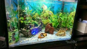 Acquario aperto con plafoniera lampade t5 posot class for Arredo acquario acqua dolce