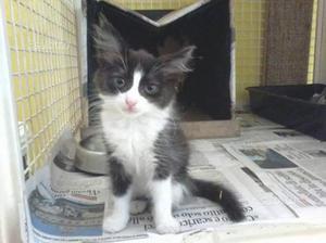 Cuccioli gattini in adozione