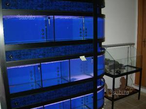 Espositore perla vendita di pesci