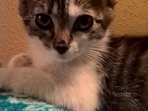 Regalo gattina vaccinata