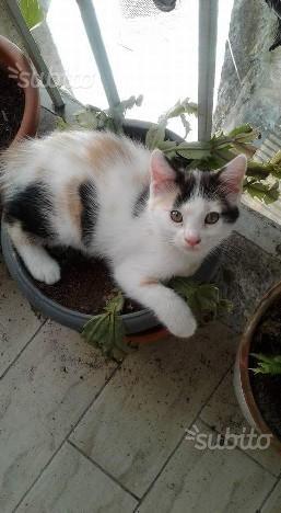 Regalo gattini di due mesi