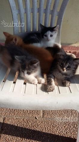 Regalo gattini due mesi