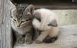 Gattini di due mesi