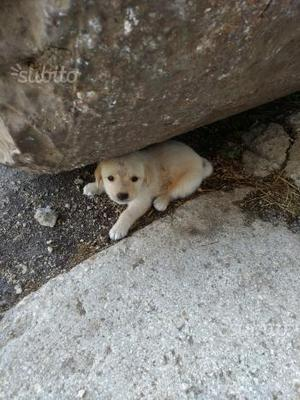 Cuccioli meticci in adozione